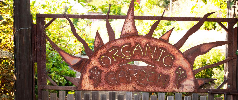 organic garden tree bones