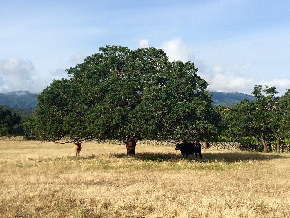 Beltane-Tree