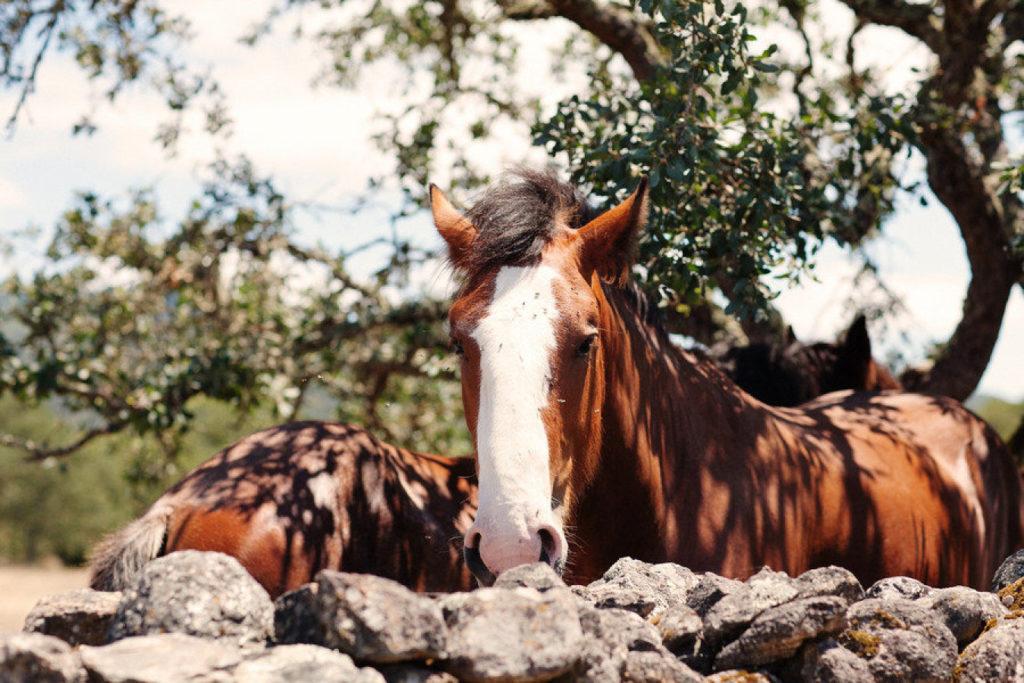 Horses-Beltane-Ranch