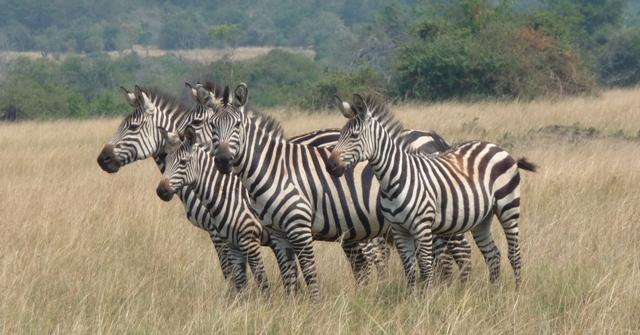 MY TRAVEL DREAMS X RWANDA PARC NATIONAL AKAGERA