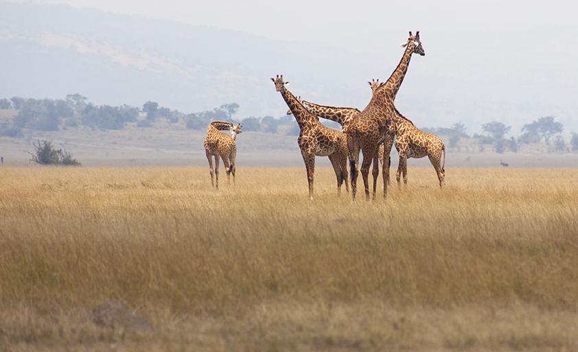 MY TRAVEL DREAMS X RWANDA parc