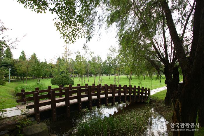 MYTRAVELDREAMS x KOREA FOREST